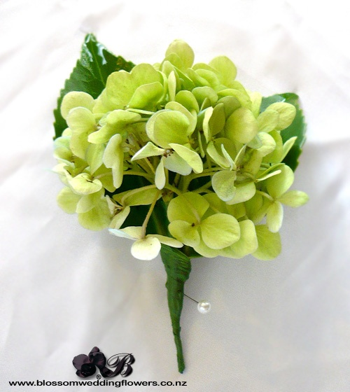 hydrangea buttonhole, something like this only with cream hydrangea.