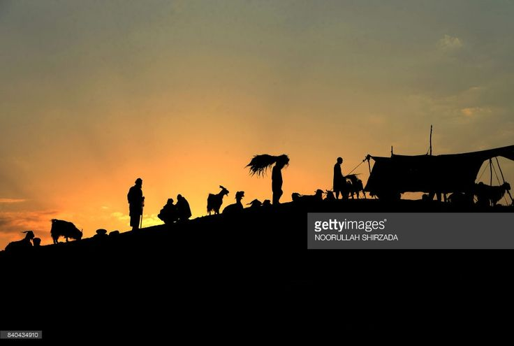 TOPSHOT - Afghan men shop for livestock at a market ahead of the Eid al-Adha Muslim festival, on the outskirts of Jalalabad, on August 29, 2017. Muslims across the world are preparing to celebrate the annual festival of Eid al-Adha, or the Festival of Sacrifice, which marks the end of the Hajj pilgrimage to Mecca and in commemoration of Prophet Abraham's readiness to sacrifice his son to show obedience to God. /