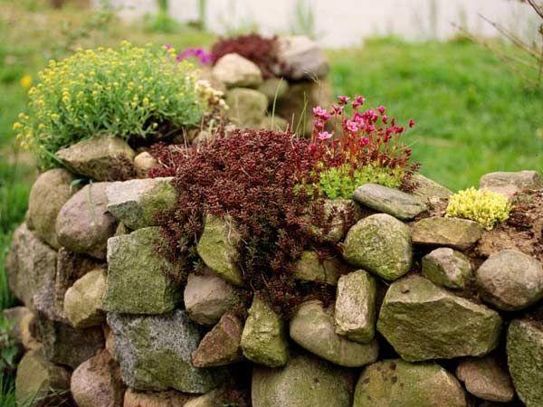 Die locker aufgesetzte Natursteinmauer verschönert jeden Bauerngarten und lässt sich besonders gut mit Steingartengewächsen bepflanzen.