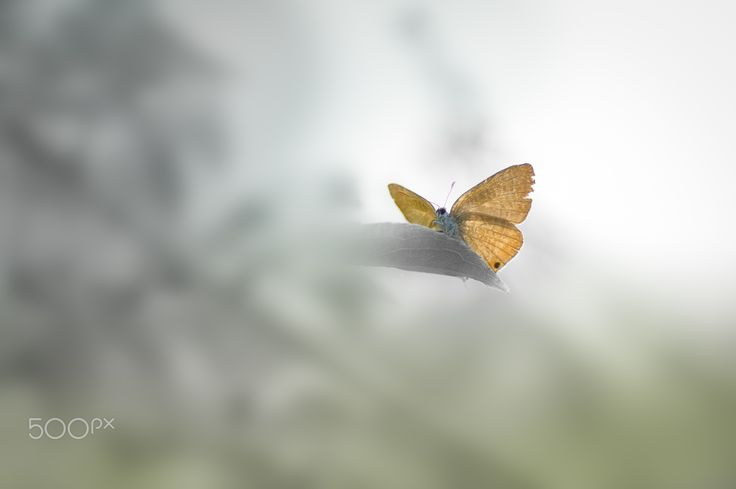 Seclusion - Butterfly