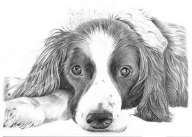 Dog Drawings - Pencil Sketches of Dogs and Puppies for Sale