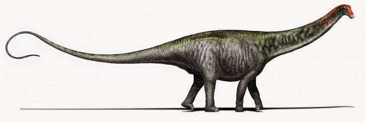"Brontosaurus meaning ""thunder lizard"" is a genus of gigantic quadruped sauropod dinosaurs. Although the type species,"