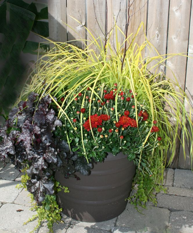 """Get three seasons of color-- maybe four!-- with """"Winter Green,"""" this award-winning container planting by Mischler's Florist and Greenhouses in Williamsville NY. The secret? It's made with perennials. Click back to the article to find out how you can make it yourself."""