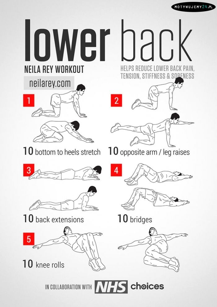Low Back Pain Exercises Exercises that stretch and strengthen the muscles of…