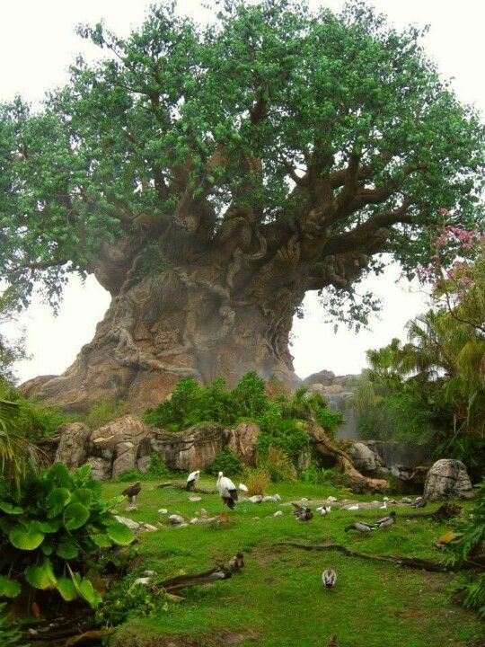 Baobab,Tree of Life. . this simple fact that THIS is REAL absolutely blows my mind  #PadreMedium