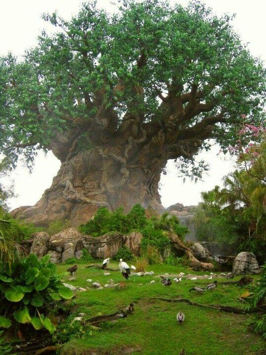Baobab,Tree of Life:
