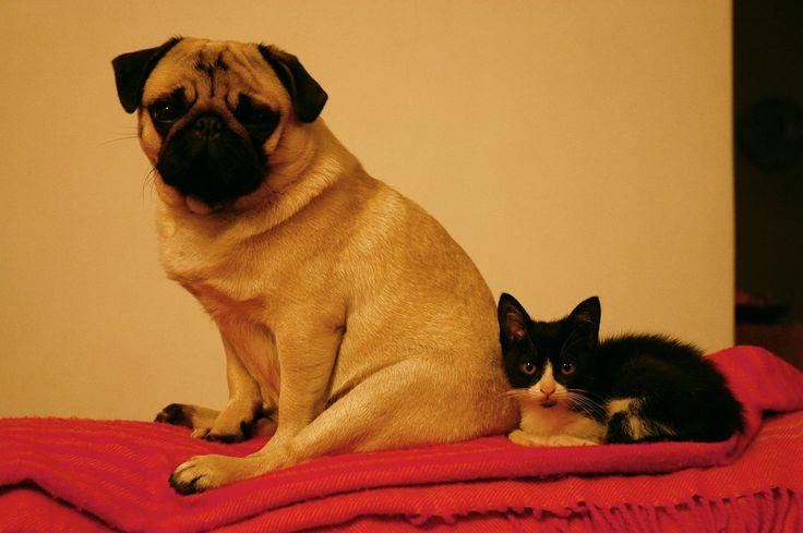 Erundina e a gata Branca e Preta <3