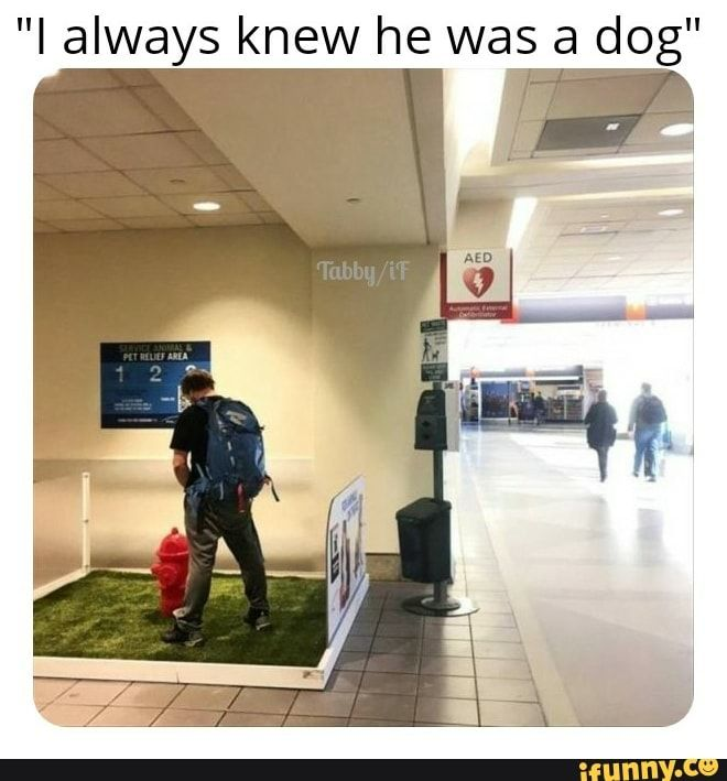 I Always Knew He Was A Dog Ifunny Funny Pictures Stupid Guys Ifunny