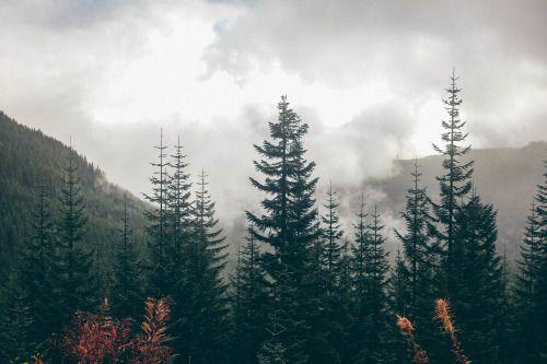 forest kép