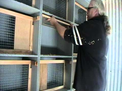 Racing Pigeon Nest boxes - YouTube