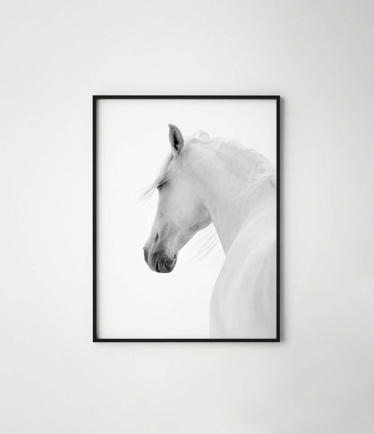 Horse print, black and white horse print, horse, wild horse, scandinavian horse, horse wall art, horse photography, white horse poster by PosteraDesign on Etsy https://www.etsy.com/listing/503170434/horse-print-black-and-white-horse-print