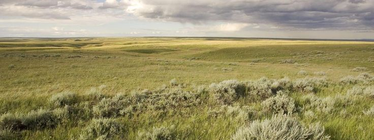 Learn about the wildlife and people in the Northern Great Plains, as well as the…