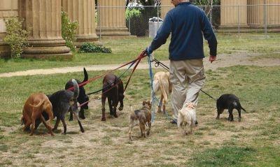 Wil je zieke dieren beter maken, of wil je juist zorgen dat dieren gezond blijven? Dat is in het kort het verschil tussen de opleiding Dierwetenschappen en de opleiding Diergeneeskunde (studie dierenarts).