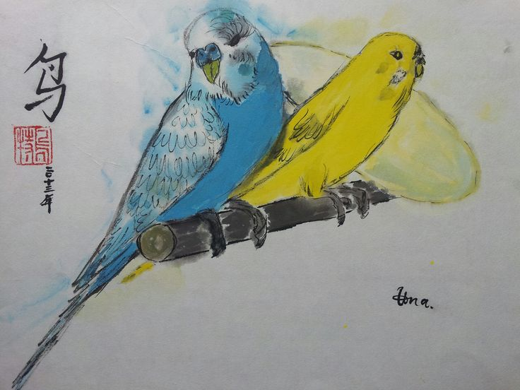 Budgie -  Wellensittiche