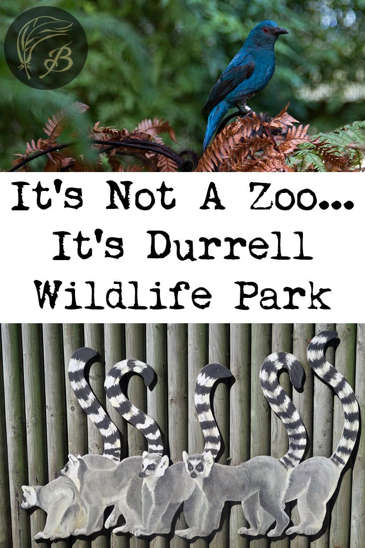 Do you have an interest in animal conservation? You should consider visiting the Durrell Wildlife Park on the biggest of the Channel Islands, Jersey.