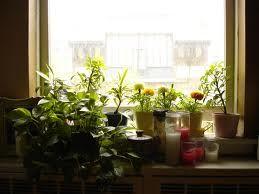 How to set up plants in the apartment? Click on the picture.    ///// Jak ustawić rośliny w mieszkaniu? Kliknij w zdjęcie.