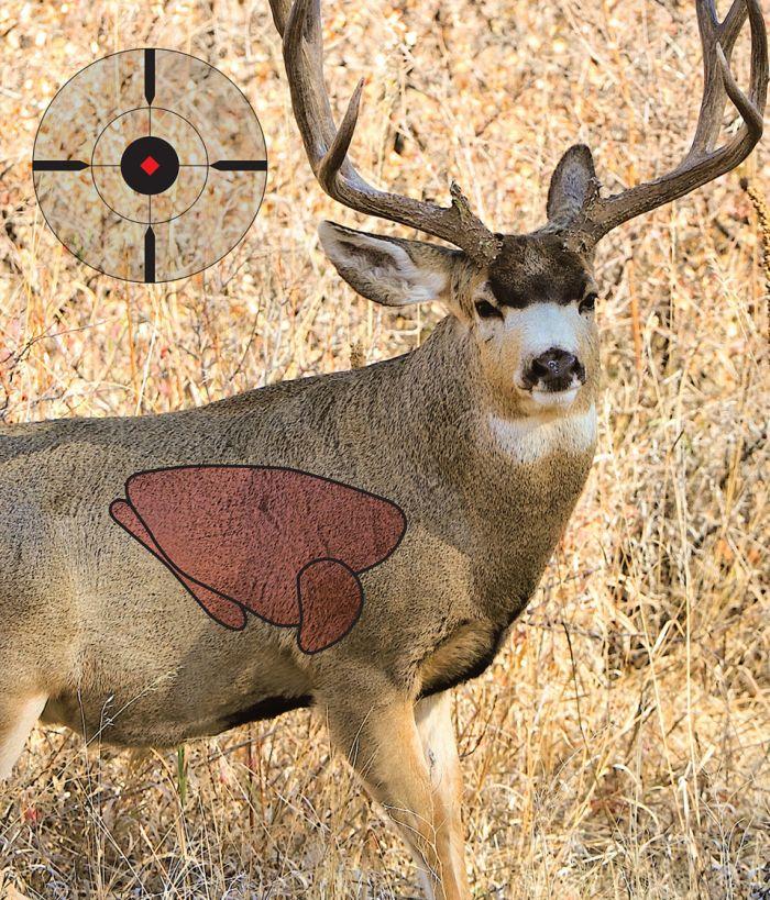 Mule Deer Vitals Diagram - Online Schematic Diagram •