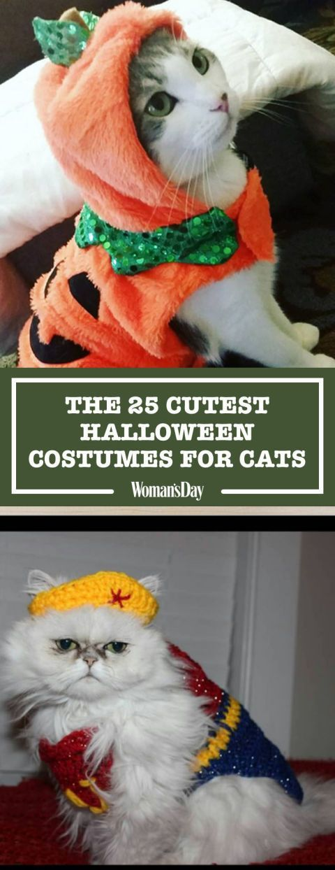 Here you'll find the cutest Halloween costumes for cats including ones you can buy and ones you can DIY. Click through for the fun ideas.