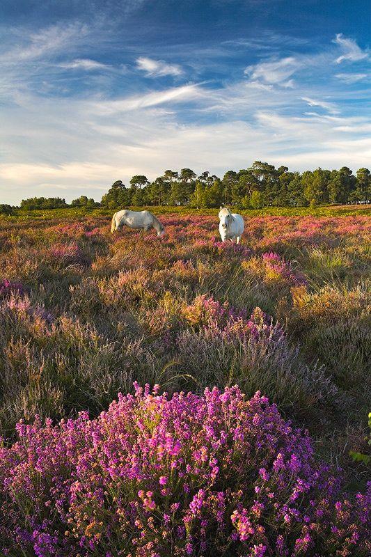 "bellasecretgarden: "" (via New Forest, England | British Countryside | Pinterest) """