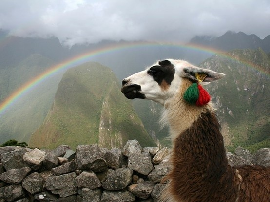 I really dont know why you guys are all hating on my llamas but they live in Peru and hopefully thats where i will be soon!