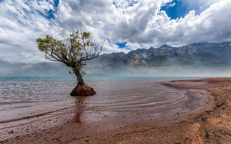 Lone Tree Glenorchy - New Zealand's South Island Is Heaven On Earth | Bored Panda