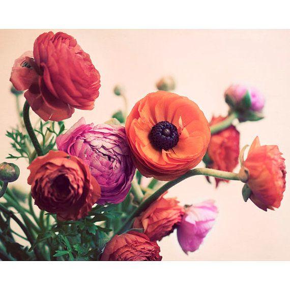 Stilleven bloem fotografie, Ranunculus, voorjaar Print, Romantisch, roze, abrikoos, bloemen, moeders dag, zachte, dromerige, Wall Art, Decor van het huis