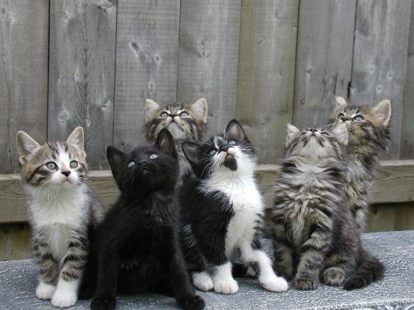 #cat #kitten #cute #zolux