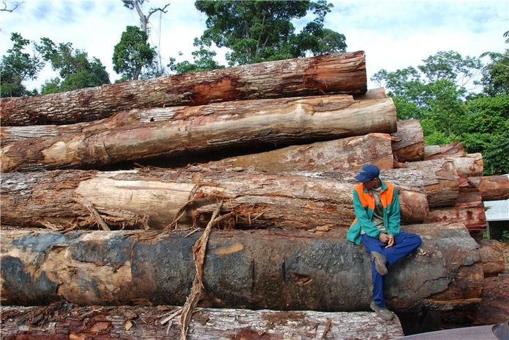 Amazon rainforest losses impact on climate change, study shows:  Widespread removal of trees has contributed to a rise in the amount of carbon dioxide in the atmosphere, increasing the potential impact of climate change, researchers say. Deforestation of the Amazon accounted for 1.5 per cent of the increase in carbon dioxide levels seen since the mid-nineteenth century, the team says.