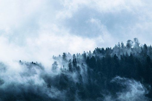 Fog, Forest, Mountain World, Clouds