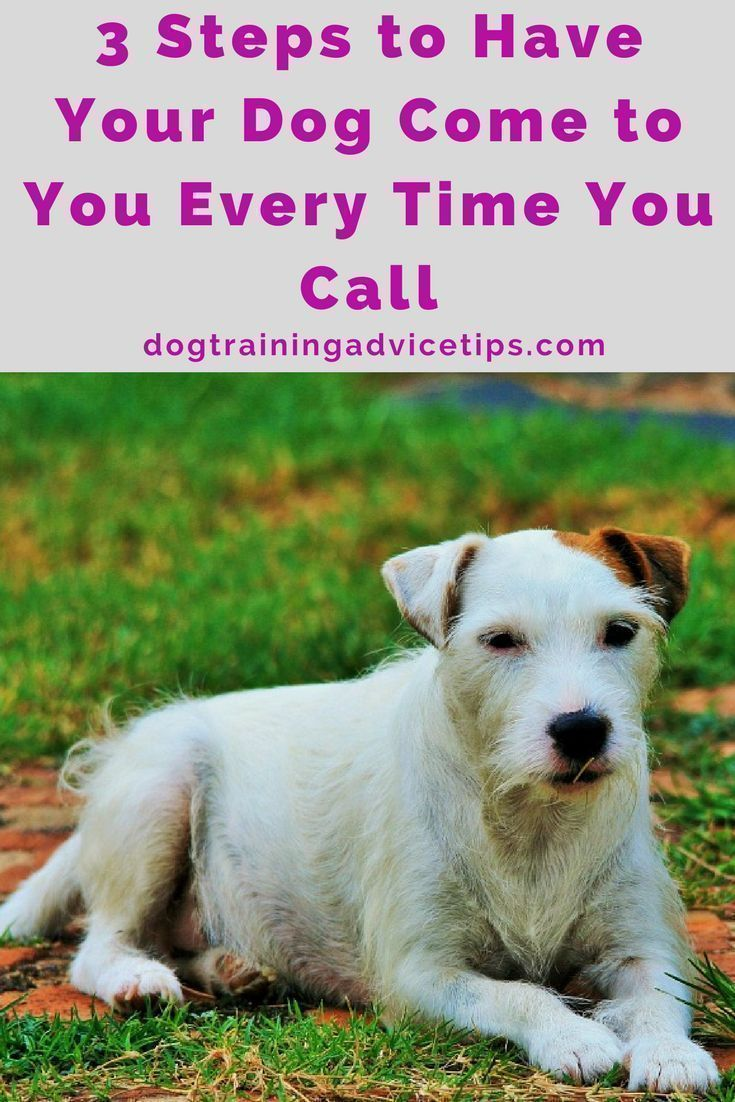 3 Steps To Have Your Dog Come To You Every Time You Call Dog