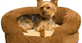 Super cute cheap dog beds for small dogs