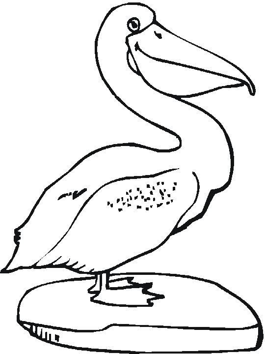 111 Best Bird Coloring Pages Images On Pinterest
