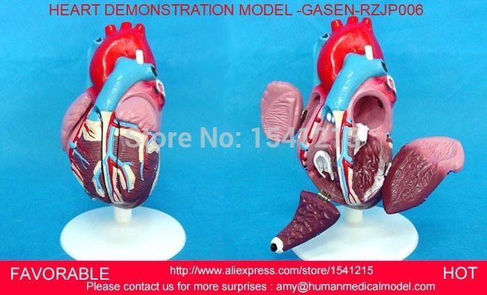 78.00$  Watch here - http://alinji.shopchina.info/go.php?t=32692643572 -  HEART ANATOMY VISCERA MEDICAL MODEL,MODEL OF CARDIAC CARDIAC ANATOMY , HUMAN HEART, ,HEART MEDIUM DEMO MODEL (6) -GASEN-RZJP006  #buyonline