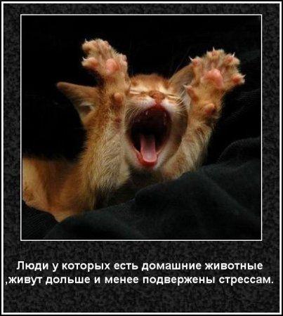 Забавные и интересные факты о кошках