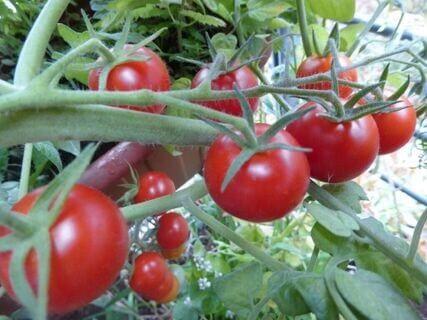 Warum unbedingt Bio-Saatgut kaufen – woher beziehe ich gute Samen?