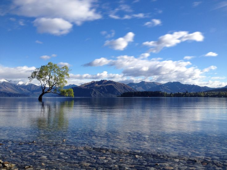 Penembakan New Zealand Pinterest: Lone Tree, Lake Wanaka, New Zealand. Photo: Fiona Austin