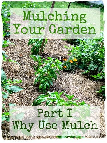 Mulching your garden Part I-Why you should use mulch