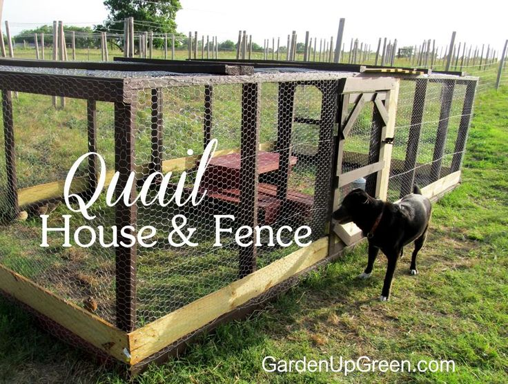Let your quail live large.  This Quail House can also work as a fence while your birds live naturally.