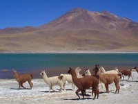 Salars (lacs salés) d'Atacama, Chili
