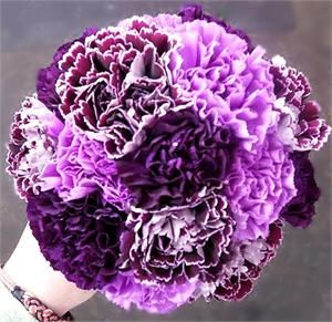 purple carnations bouquets - Bing Images