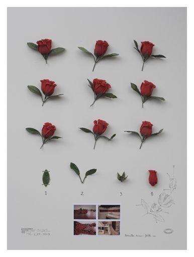 Alberto Baraya, Herbario de plantas artificiales, Rosas Nang Jing Lu (2012)