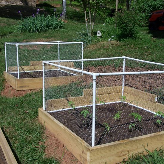 raised garden idea with a small fence to protect the plants from pesky little critters