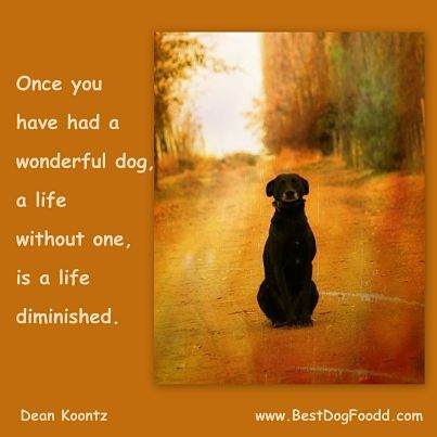 Once you have a dog, there is always a spot in your heart for one, no matter what size