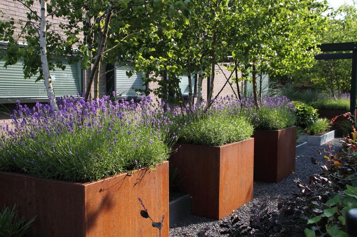 Plantenbakken van cortenstaal gevuld met mooie lang bloeiende lavendel. These planters are made of cortensteel and filled with lavender.