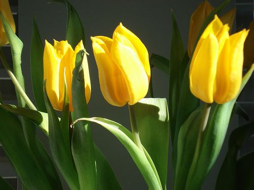 Meaning Of Tulip Calvinism