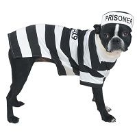 Prison Pooch Dog Halloween Costume Price €18.99 [£16.52]