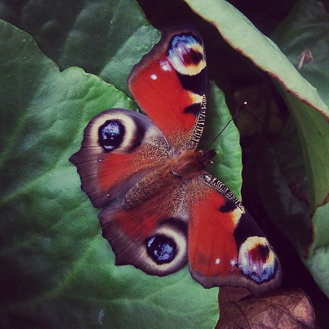 #beautiful#butterfly#Poland#nature@instanature_789#lubiepolske