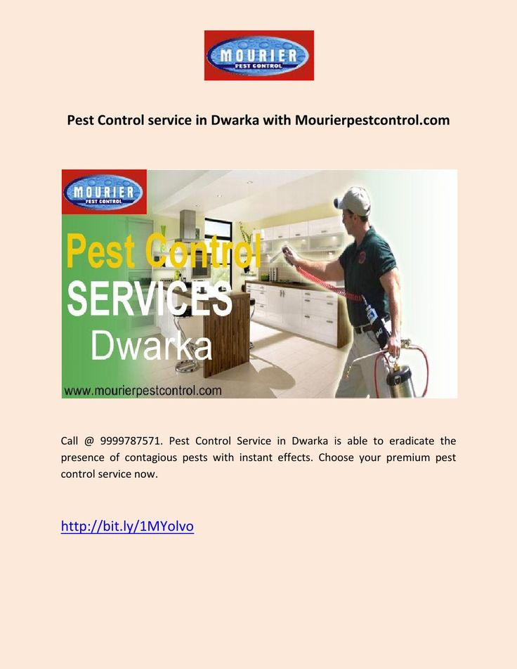 Pest Control service in Dwarka with Mourierpestcontrol.com  Call @ 9999787571. Pest Control Service in Dwarka is able to eradicate the presence of contagious pests with instant effects. Choose your premium pest control service now.