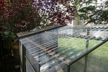 Hi Everyone,We used to have deer netting as our roof over our coop run. A few weeks ago...