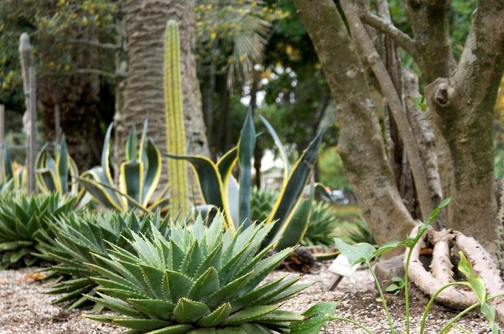 Botanical Gardens, Williamstown
